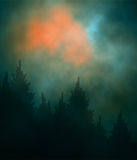 Bosque oscuro de la puesta del sol Fotografía de archivo libre de regalías