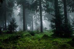 Bosque oscuro en niebla imagenes de archivo