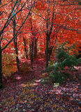 Bosque oscuro en otoño. Imagen de archivo