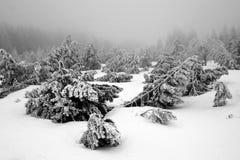 Bosque oscuro en paisaje del invierno (negro y blanco) Fotografía de archivo