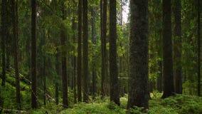 Bosque oscuro escénico metrajes