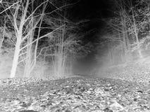 Bosque oscuro espeluznante en blanco y negro fotos de archivo libres de regalías