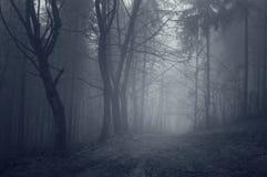 Bosque oscuro etéreo con niebla imagen de archivo
