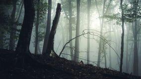 Bosque oscuro frecuentado Imagen de archivo