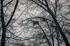Bosque oscuro grueso, árboles negros Textura del fondo de los troncos de árbol Fotos de archivo