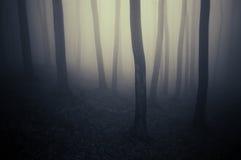 Bosque oscuro mínimo misterioso con niebla fotos de archivo