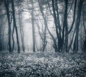 Bosque oscuro misterioso en niebla con las hojas y las flores Imágenes de archivo libres de regalías
