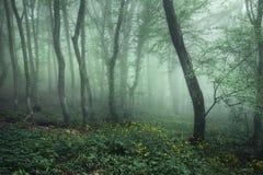 Bosque oscuro misterioso en niebla con las hojas y las flores del verde Foto de archivo