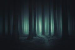 Bosque oscuro y asustadizo imagen de archivo