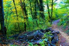 Bosque otoñal Imagen de archivo libre de regalías