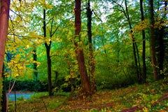 Bosque otoñal Fotografía de archivo libre de regalías