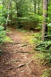 Bosque otoñal Fotos de archivo