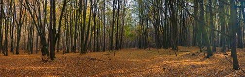 Bosque otoñal Imagenes de archivo