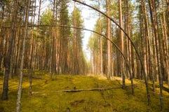 Bosque otoñal Fotos de archivo libres de regalías