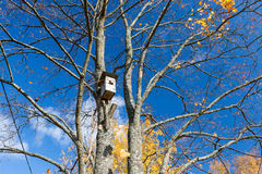 Bosque otoñal Imágenes de archivo libres de regalías