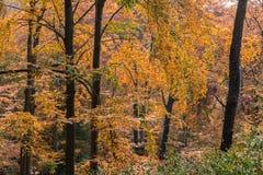 Bosque otoñal Imagen de archivo