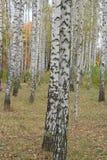Bosque otoñal Foto de archivo libre de regalías