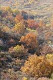 Bosque otoñal de la montaña Foto de archivo libre de regalías