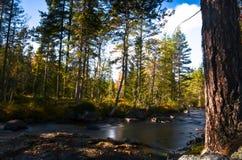 Bosque otoñal del throuch del río que fluye Imagenes de archivo