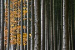 Bosque otoñal hermoso Foto de archivo