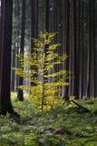 Bosque otoñal hermoso Imagenes de archivo