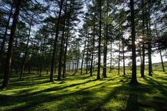 Bosque pacífico Imagen de archivo libre de regalías