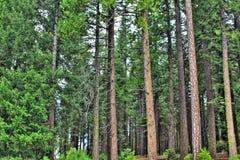 Bosque pacífico Fotos de archivo