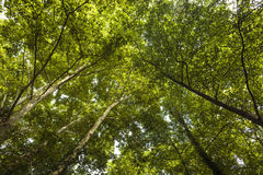 Bosque para arriba Foto de archivo libre de regalías