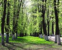 Bosque, parque, árboles Foto de archivo