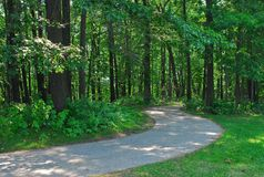 Bosque path1 Imágenes de archivo libres de regalías