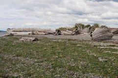 Bosque, peble y alga marina en la playa de Mukilteo Fotos de archivo