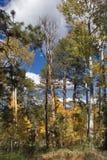 Bosque pequeno imagens de stock royalty free