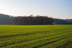 Bosque pequeno quadro por campos verdes no sol de nivelamento fotografia de stock