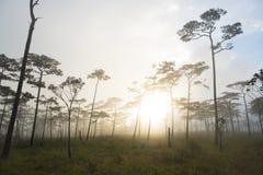 Bosque Phu Soi Dao National Park del árbol de pino del paisaje de la puesta del sol Fotografía de archivo