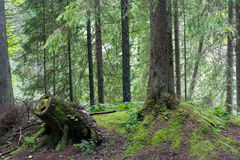 Bosque polaco Fotos de archivo