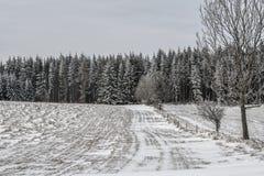Bosque polaco del invierno Fotografía de archivo