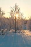 Bosque polar Imágenes de archivo libres de regalías
