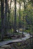 Bosque por la mañana de la primavera Fotografía de archivo