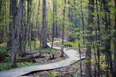 Bosque por la mañana de la primavera Fotos de archivo libres de regalías