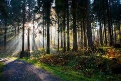 Bosque por la mañana Fotografía de archivo libre de regalías