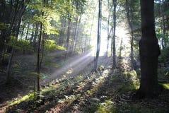 Bosque por mañana fotografía de archivo