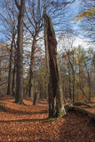 Bosque positivo del otoño de los ambientes Fotos de archivo