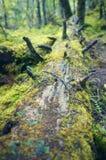 Bosque primitivo Fotografía de archivo libre de regalías