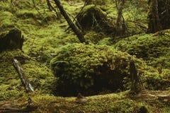 Bosque primitivo Imágenes de archivo libres de regalías