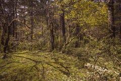 Bosque primitivo Imagen de archivo libre de regalías