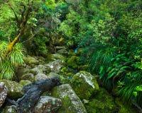 Bosque primitivo Imagenes de archivo