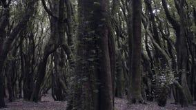 Bosque profundo almacen de metraje de vídeo
