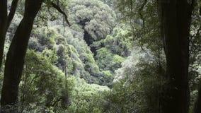 Bosque profundo metrajes