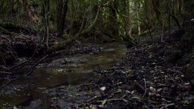 Bosque profundo almacen de video