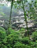 Bosque profundo Imagenes de archivo